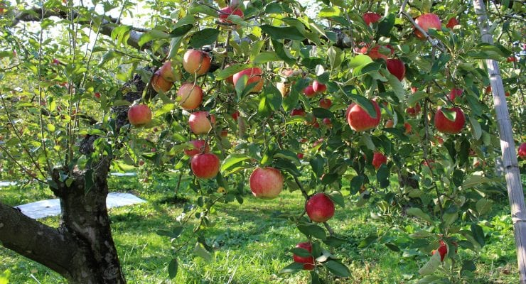 apple-2076435_1920