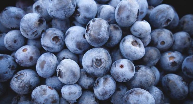 blueberries-690072_1920
