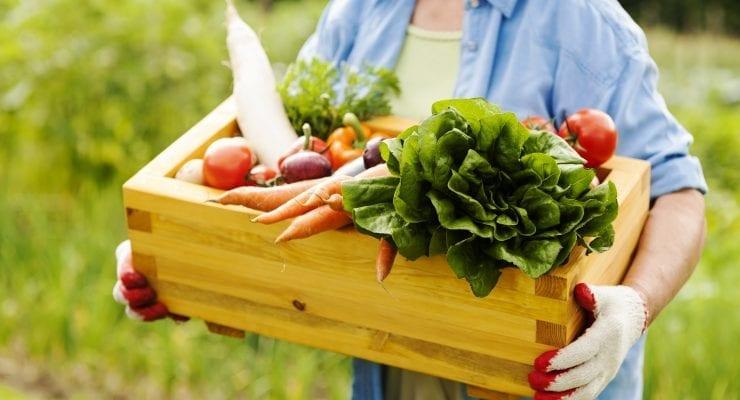Cueillette de légumes