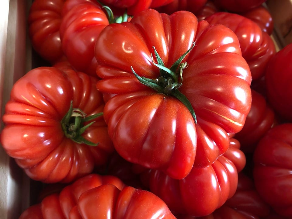 Tomates ancestrale